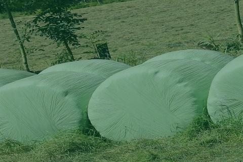 Silage Disposal